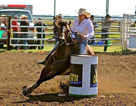 1Y Quarter Horses - Performance horses for barrel racing